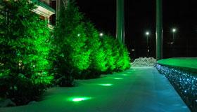 Подсветка елей в парке